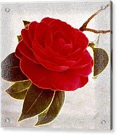 Camellia Spectacular Acrylic Print by Ben and Raisa Gertsberg