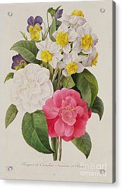 Camellias Narcissus And Pansies Acrylic Print by Pierre Joseph Redoute