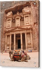 Camels In Petra Acrylic Print