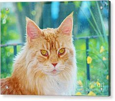 Cameo Golden Eyes Acrylic Print by Judy Via-Wolff