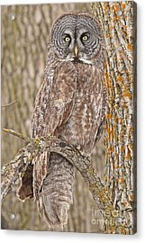 Acrylic Print featuring the photograph Camouflage-an Owl's Best Friend by Heather King
