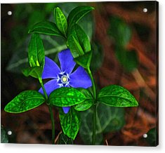 Camouflage Acrylic Print by Frozen in Time Fine Art Photography