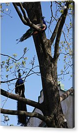 Acrylic Print featuring the photograph Can I Join You? by Vadim Levin