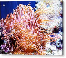 Can You Find Nemo Acrylic Print