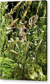 Can You See Me Acrylic Print