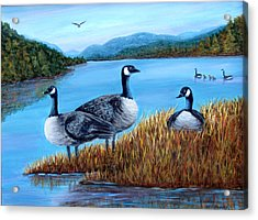 Canada Geese - Lake Lure Acrylic Print by Fran Brooks