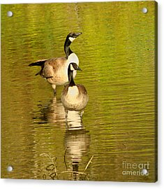 Acrylic Print featuring the photograph Canada Geese Pair by Bob and Jan Shriner