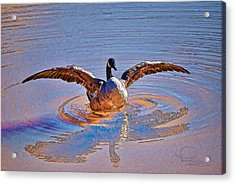 Acrylic Print featuring the photograph Canada Goose by Ludwig Keck