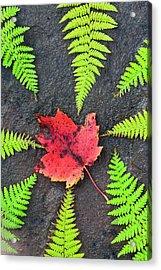 Canada, Nova Scotia, Cape Breton, Eight Acrylic Print