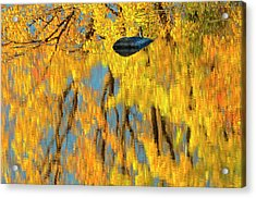 Canada, Ontario, Whitefish Acrylic Print by Jaynes Gallery