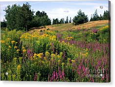 Acrylic Print featuring the photograph Canada Wildflower Meadow by Chris Scroggins