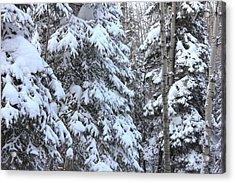 Canadian Forest - Winter Snowfall Acrylic Print
