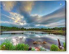Canadian Geese On A Marylamd Pond Acrylic Print