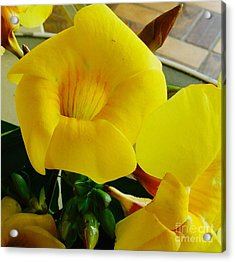 Canario Flower Acrylic Print by The Art of Alice Terrill