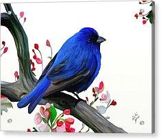 Canary Blue Morning Acrylic Print