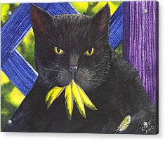 Canary? Acrylic Print by Catherine G McElroy