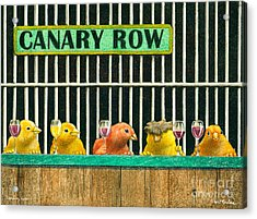 Canary Row... Acrylic Print by Will Bullas