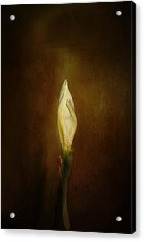 Candle In The Wind Acrylic Print by Anne Rodkin