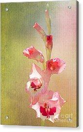 Candy Cane Gladiolas Acrylic Print