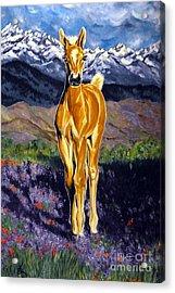 Candy Rocky Mountain Palomino Colt Acrylic Print