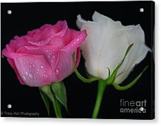 Candy Roses Acrylic Print by Tracy  Hall