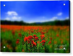 Candyland Acrylic Print by Neal Eslinger