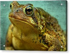 Cane Toad Acrylic Print by Michael Eingle