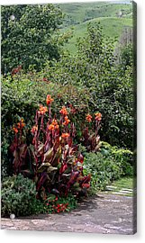 Canna Flowers On Pathway Acrylic Print by Linda Phelps