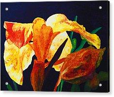 Canna Glow Acrylic Print by Margaret Saheed