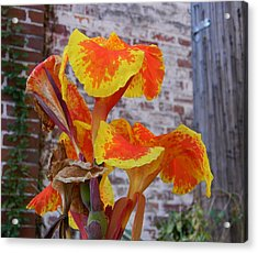 Canna Lily And Background Acrylic Print by Warren Thompson