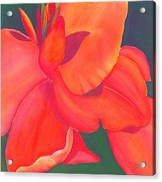 Canna Lily Acrylic Print by Debbra Nodwell-Bender