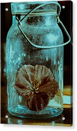 Canned Spring Acrylic Print by Susan Capuano