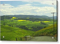 Canola Country Road Acrylic Print by Anne Mott