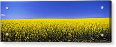 Canola Field In Bloom, Idaho, Usa Acrylic Print by Panoramic Images
