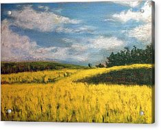 Canola Fields In Rimbey Alberta Acrylic Print by Fiona Graham