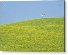 Canola Windmill Acrylic Print