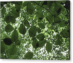 Canopy In Green 3 Acrylic Print by Melissa Stoudt