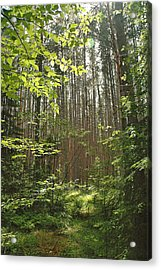 Canopy Acrylic Print by RJ Martens