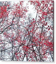 Canopy Trees Acrylic Print