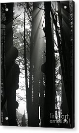 Can't See...the Forest For The Trees Acrylic Print