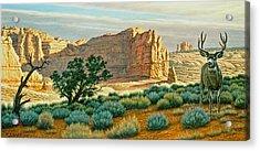 Canyon Country Buck Acrylic Print by Paul Krapf