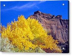 Canyon De Chelly Autumn    Acrylic Print by Douglas Taylor