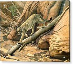 Canyon Hunter -  Cougar Acrylic Print by Paul Krapf