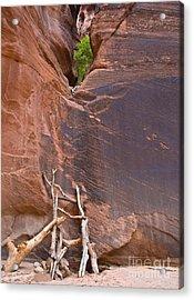 Canyon Ladder Acrylic Print
