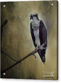 Acrylic Print featuring the digital art Canyon Lake Osprey II by Rhonda Strickland