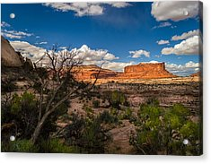 Canyon Lands Evening Acrylic Print by Michael J Bauer