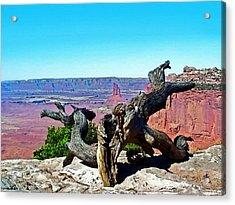 Canyon Lands National Park Acrylic Print