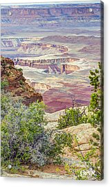 Canyon Lands Acrylic Print