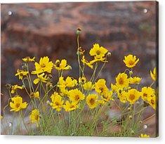 Canyon Wildflowers Acrylic Print