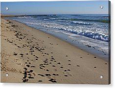 Cape Hatteras - Mermaid's Purse Laiden Beach Acrylic Print by Mountains to the Sea Photo